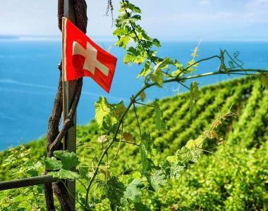 Drapeau suisse devant les vignes en terrasses du Lavaux près du village de Oron.